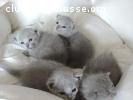 4 magnifiques chatons
