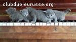 4 merveilles bleues