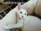 gatos sondores NEIGE