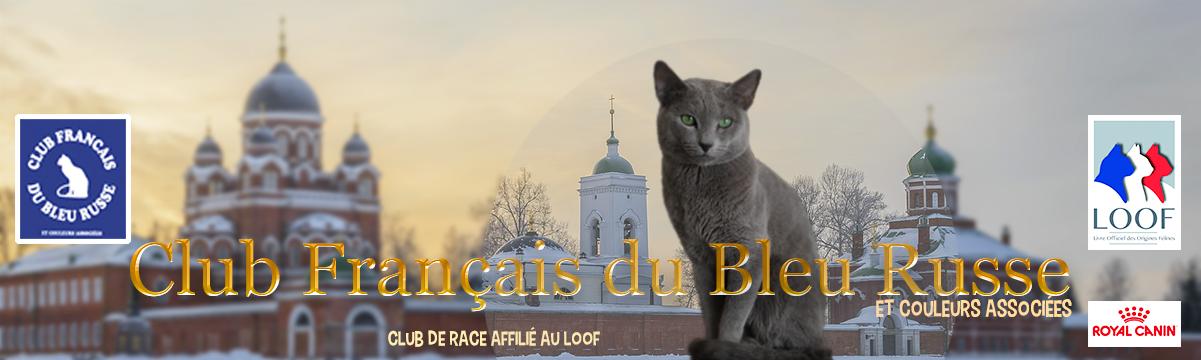 Club Français du Bleu Russe
